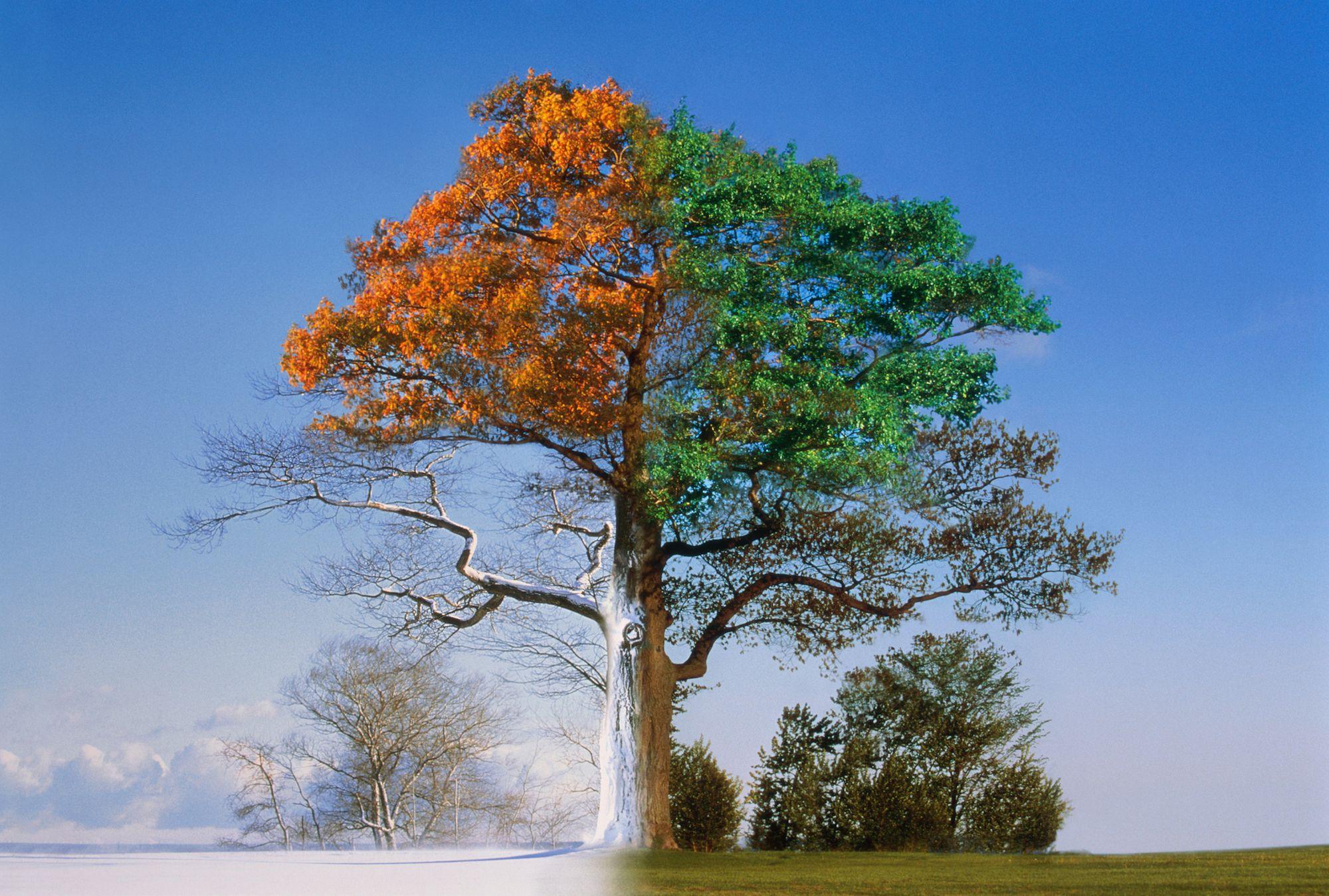 дерево зимой летом на одной картинке больно обаятельна непосредственна