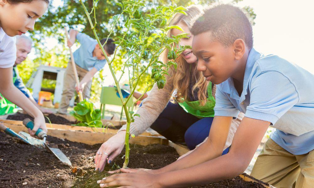 Children planting garden for school.