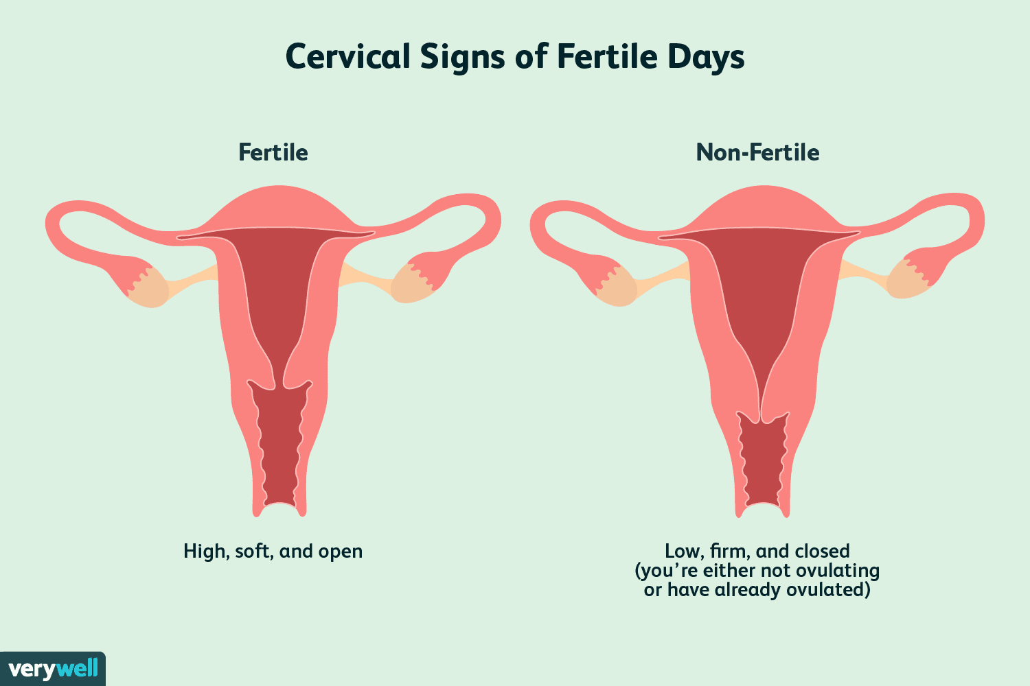 How to Check Your Cervix and Cervical Position