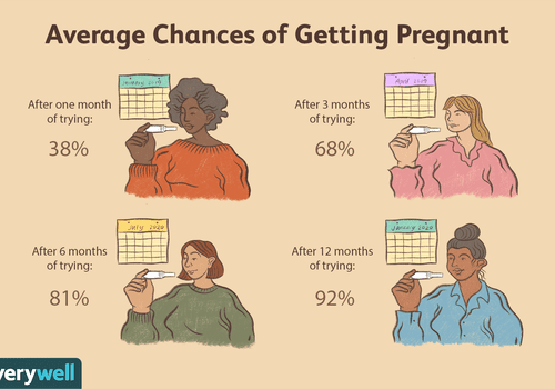 Avg chances of getting pregnant