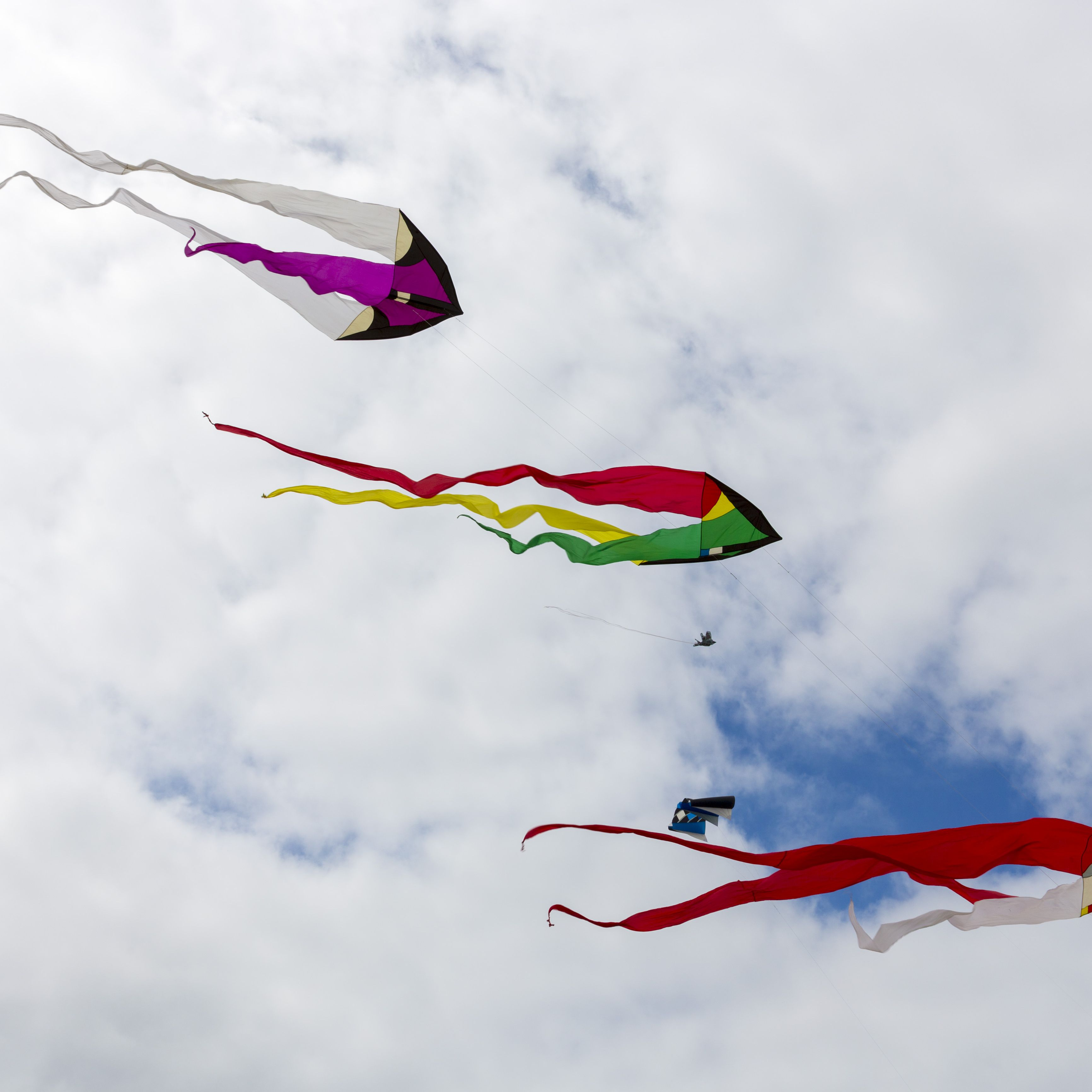 554500a9f The 8 Best Kites of 2019