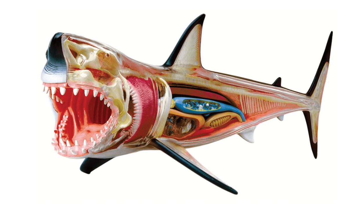 Fat Brain Toys 4D Vision Great White Shark