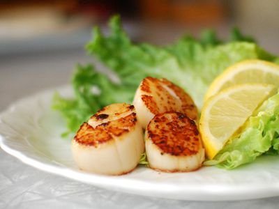 Scallops on a dinner plate