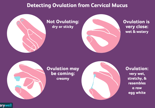 How to check cervical mucus