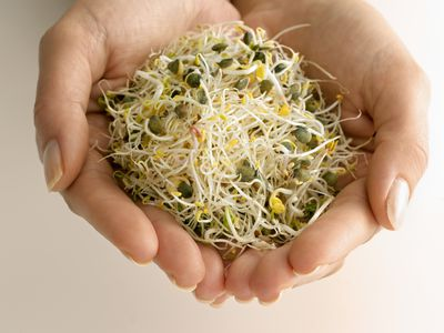 Alfalfa sprouts in woman's hands (close-up)
