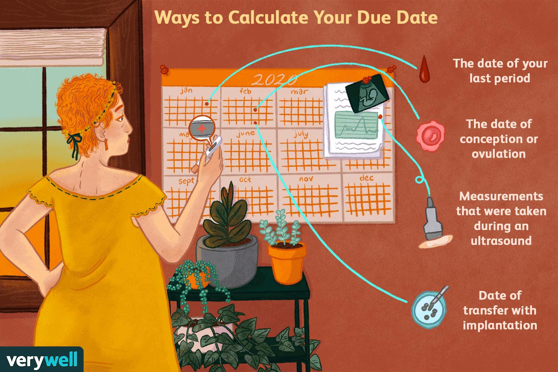 Calculator ultrasound dating Pregnancy Due