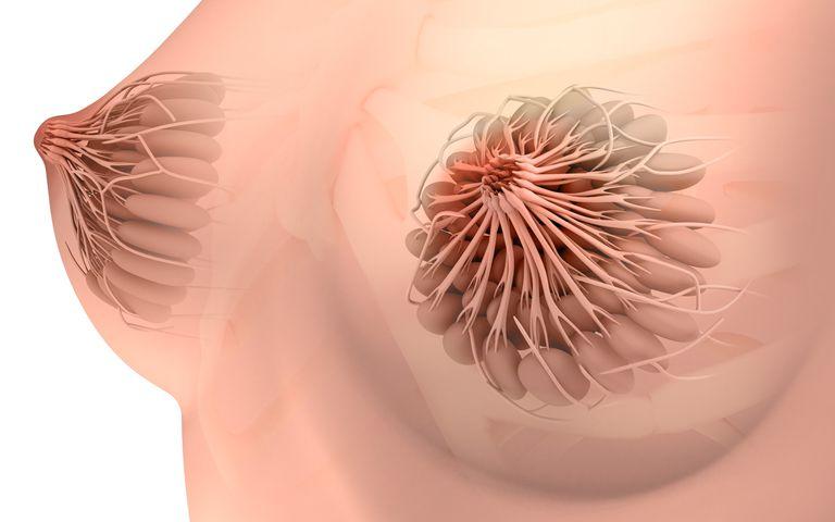 Conceptual image of female breast anatomy.