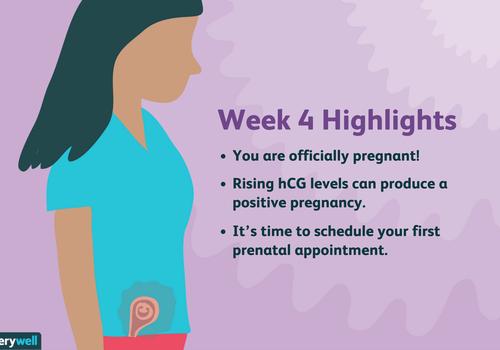 week 4 pregnancy highlights