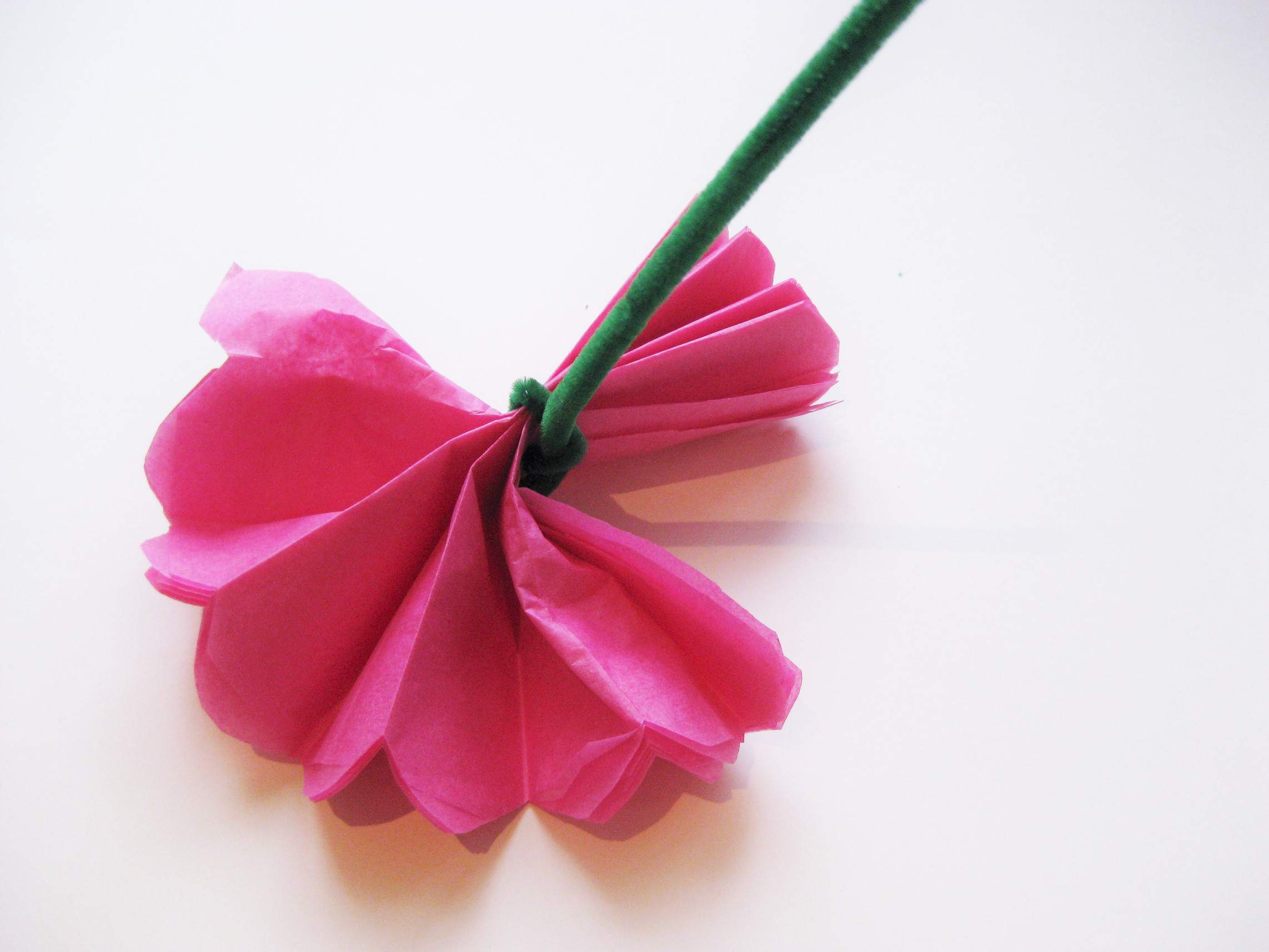 Simple steps to craft tissue paper flowers open the petals mightylinksfo
