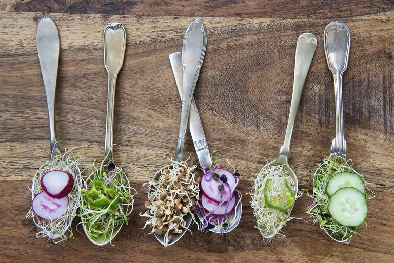 samples of various kinds of sprouts on spoons