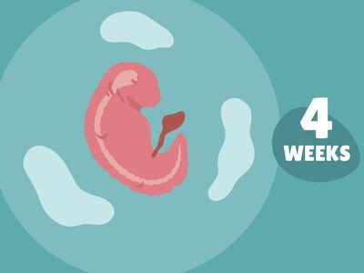 Pregnancy Week by Week: Week 4