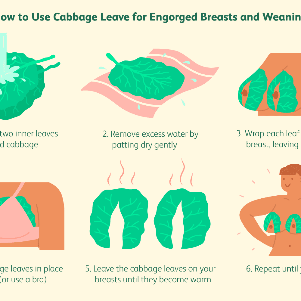 100 Photos of Do Cabbage Leaves Dry Up Breast Milk