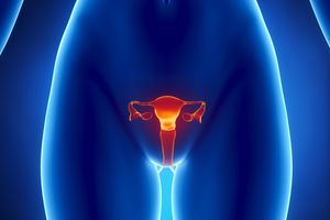 Female REPRODUCTIVE system x-ray view