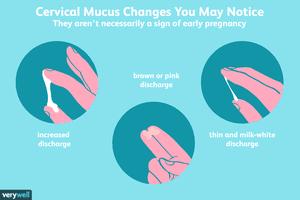cervical mucus changes