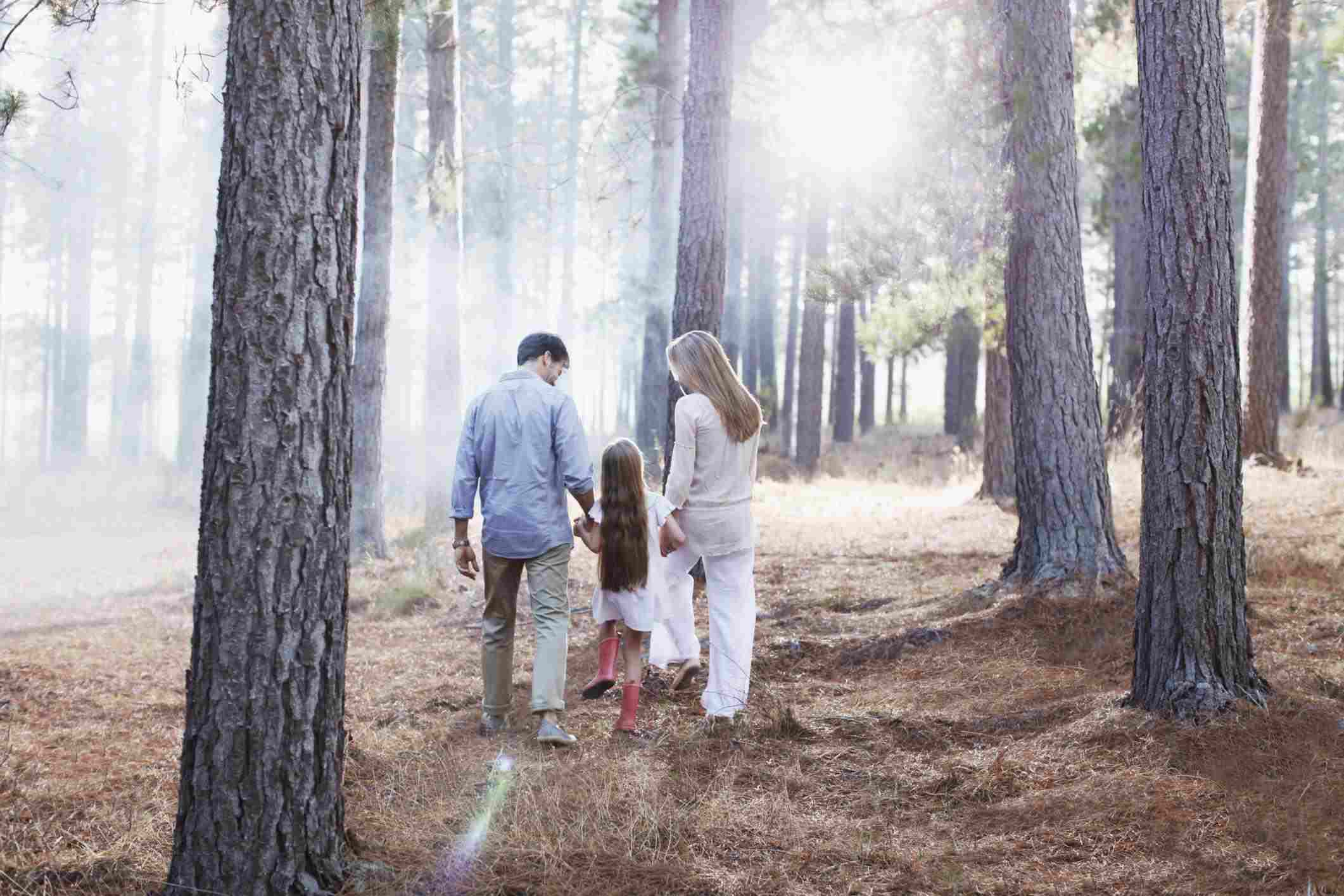Family holding hands and walking in sunny woods