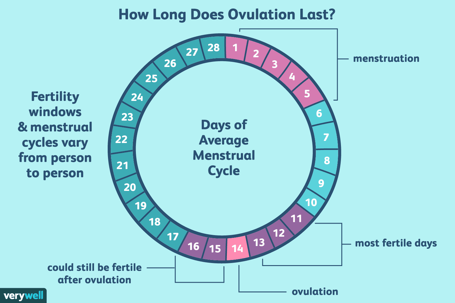 how long does ovulation and your fertile window last?