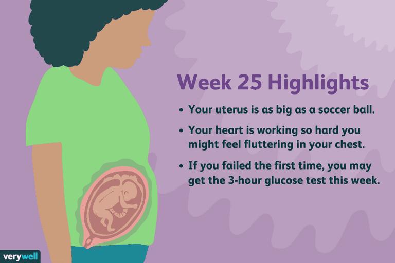 week 25 pregnancy highlights