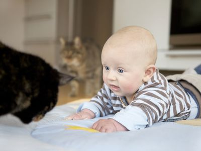 Baby crawling on stomach next to two cats