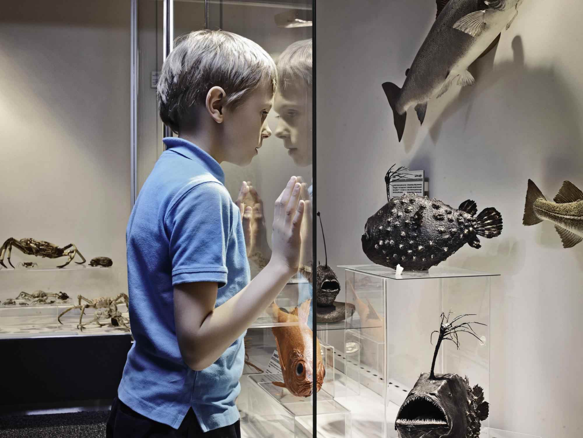 Boy admiring fish models behind glass.
