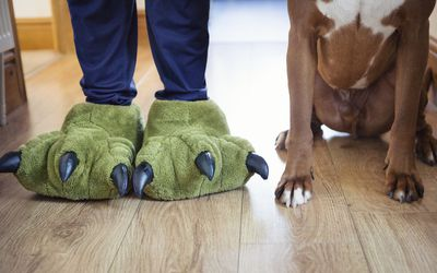 little boy in slippers and dog