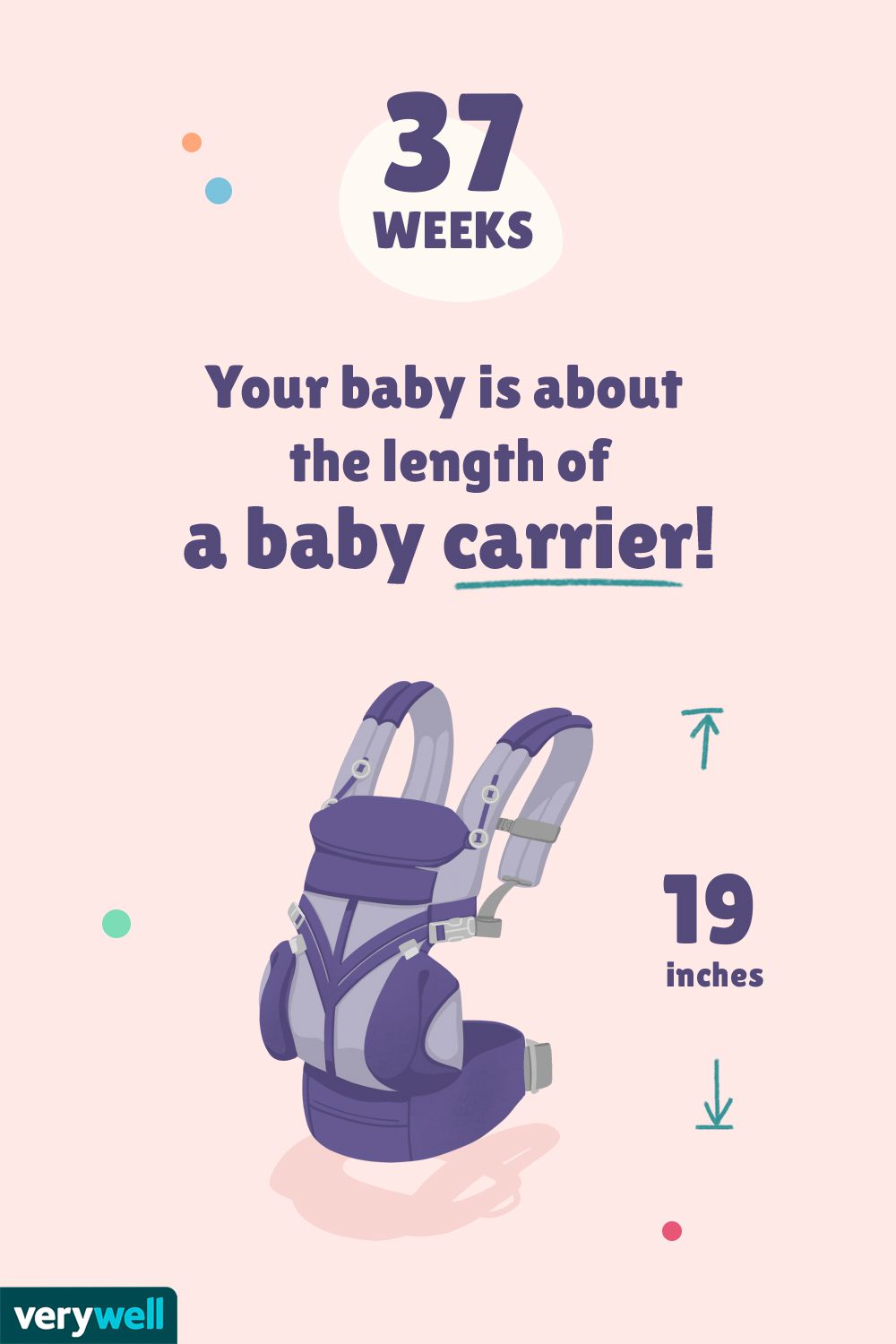 At 37 weeks pregnant, your baby is about the length of a baby carrier