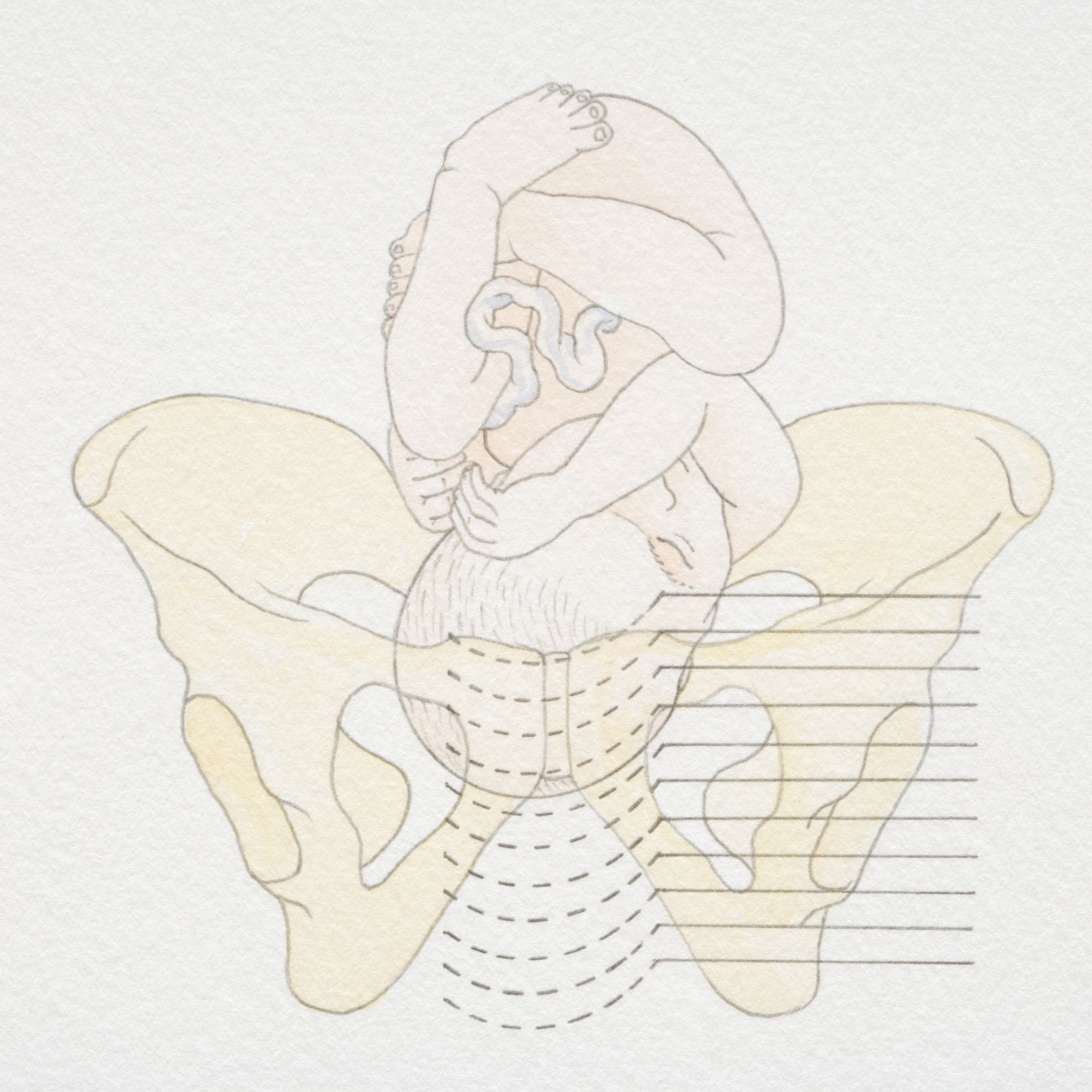 Your Baby's Fetal Station in the Pelvis