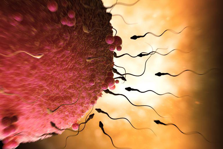 Sperm and Ovum