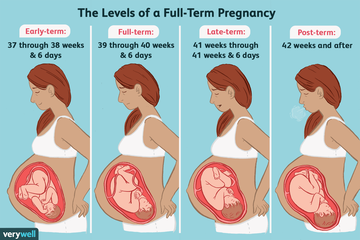 early-term, full-term, late-term, and post-term pregnancy