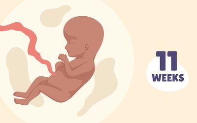 Pregnancy Week by Week: Week 11