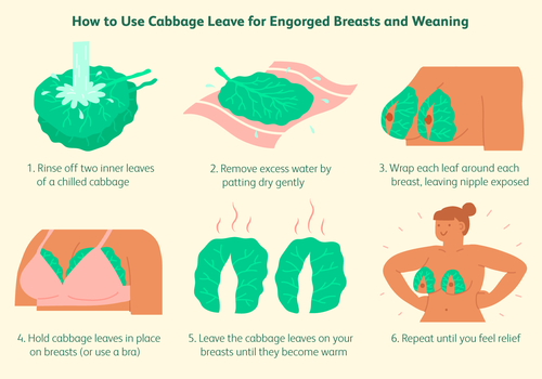 using cabbage leaves for weaning