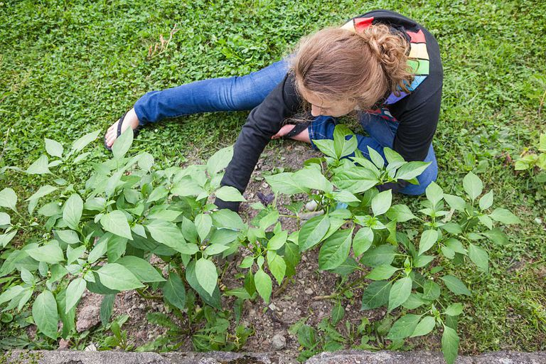 Benefits of gardening for teens for Pandy s garden center