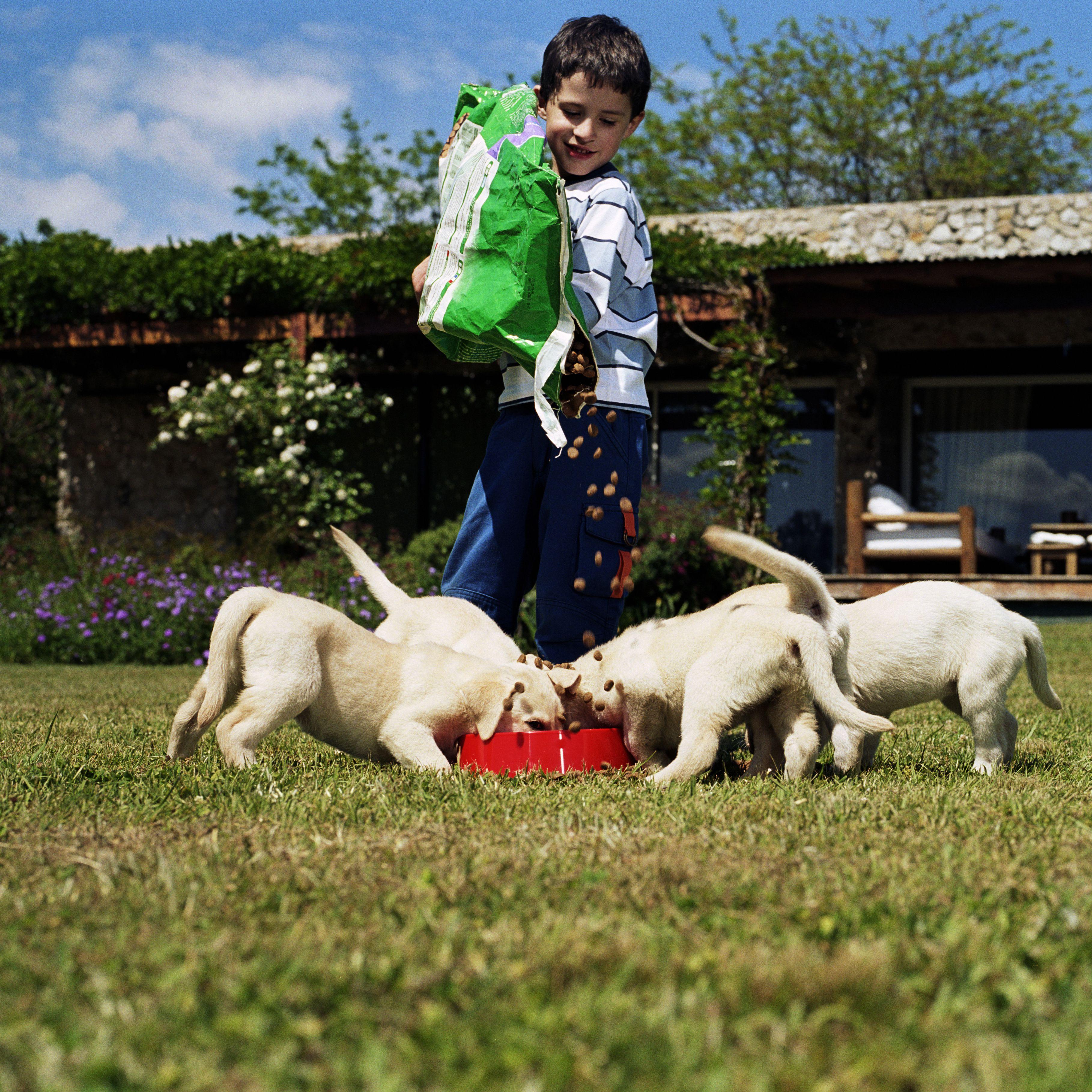 Why Pet Food Is A Hidden Danger To Kids