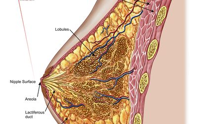 The Montgomery Glands: Information, Care, Removal