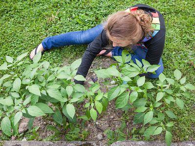 Teach your teen how to grow a garden.