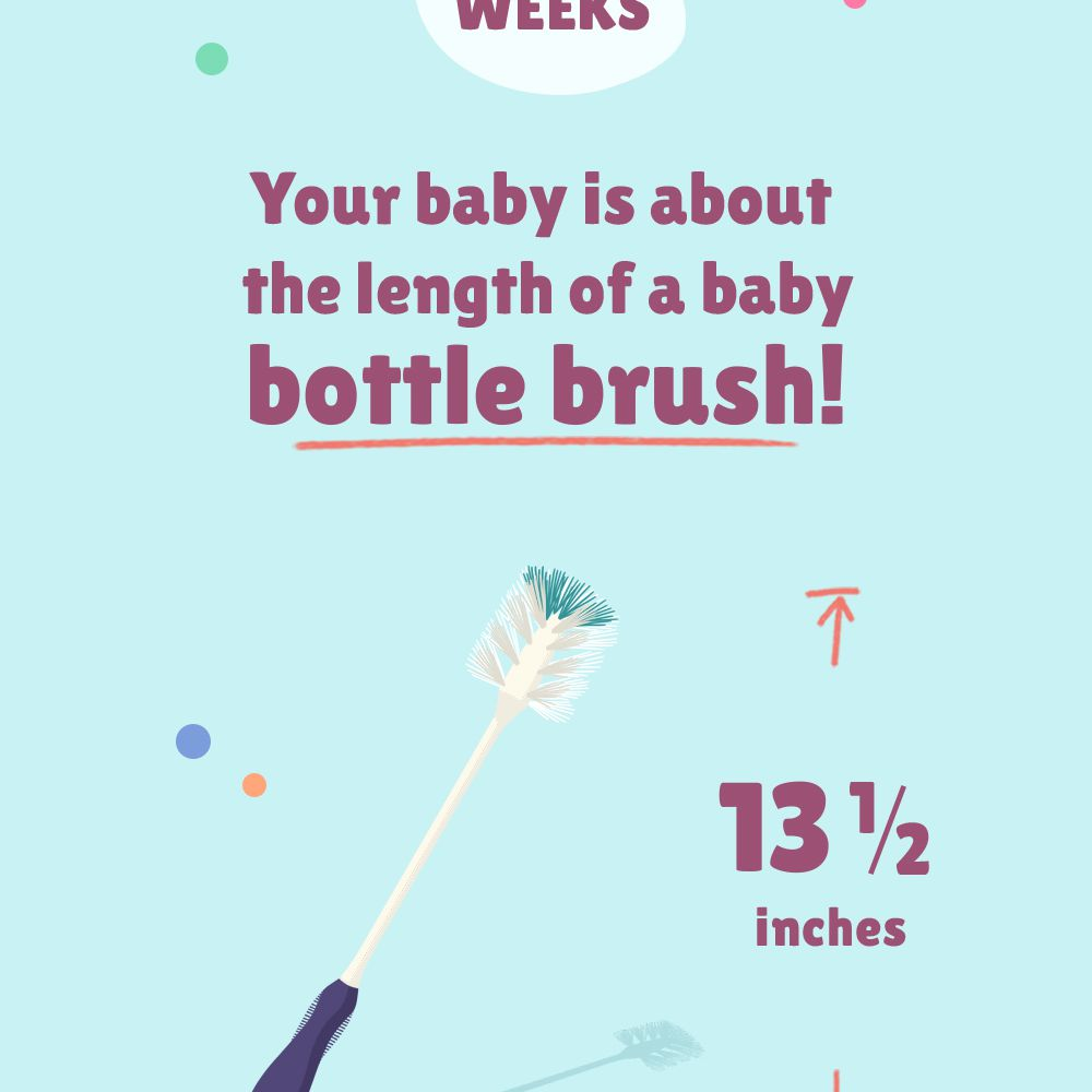 At 27 weeks pregnant, your baby is about the length of a baby botle brush