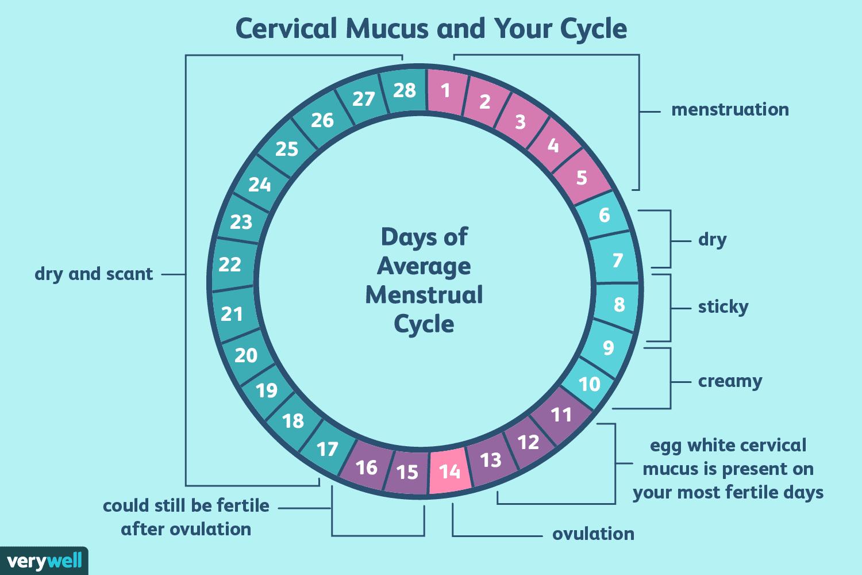 cervical mucus calendar