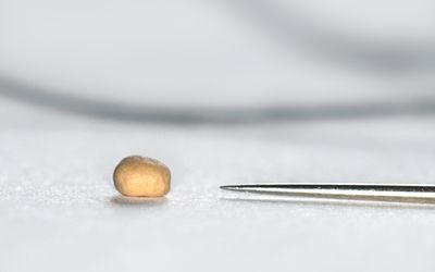 A single mustard seed with a needle