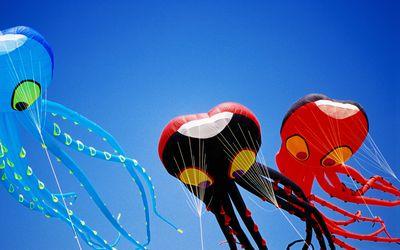 Kites flying at Berkeley Kite Festival.
