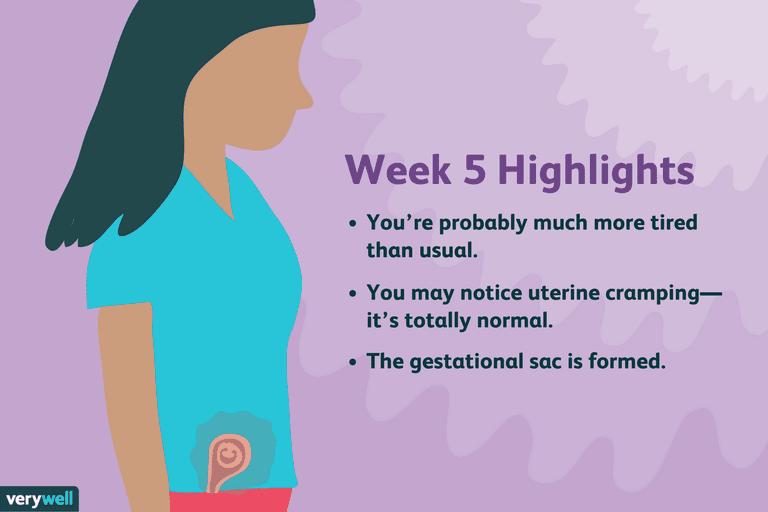 week 5 pregnancy highlights