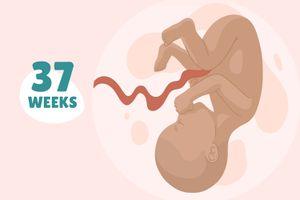 Pregnancy Week by Week: Week 37