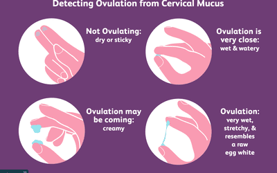 Can You Have Fertile Cervical Mucus but Not Ovulate?