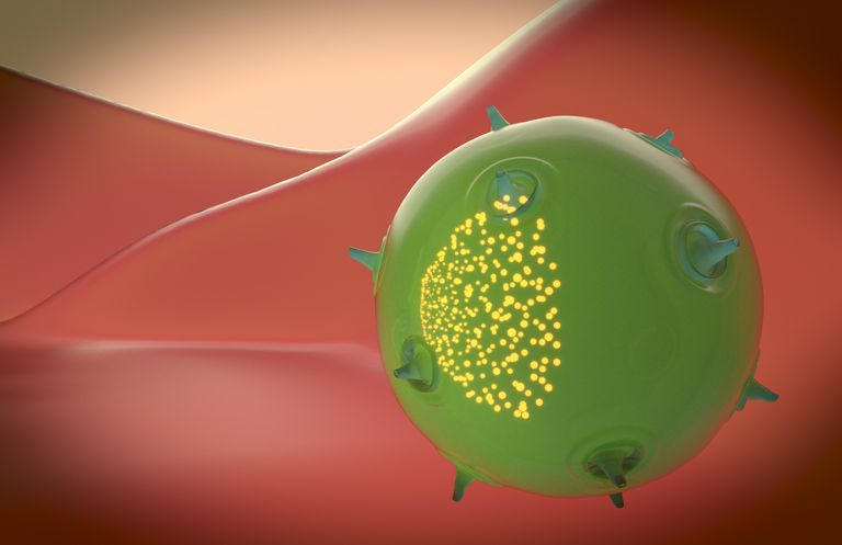 A natural killer cell of the innate immune system. The yellow particles inside the cell represents the toxin