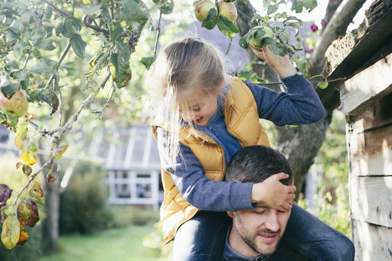 Daughter on fathers shoulders, picking apple from tree