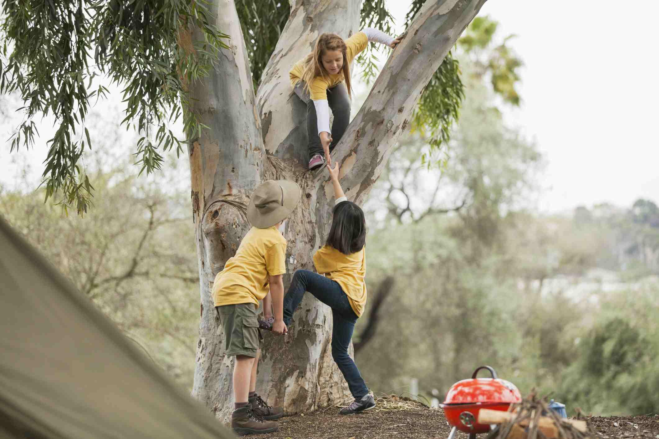Kids climbing tree while camping