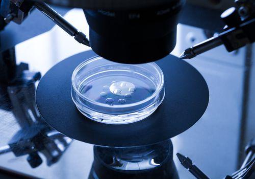 A petri dish with eggs and sperm for in vitro fertilization